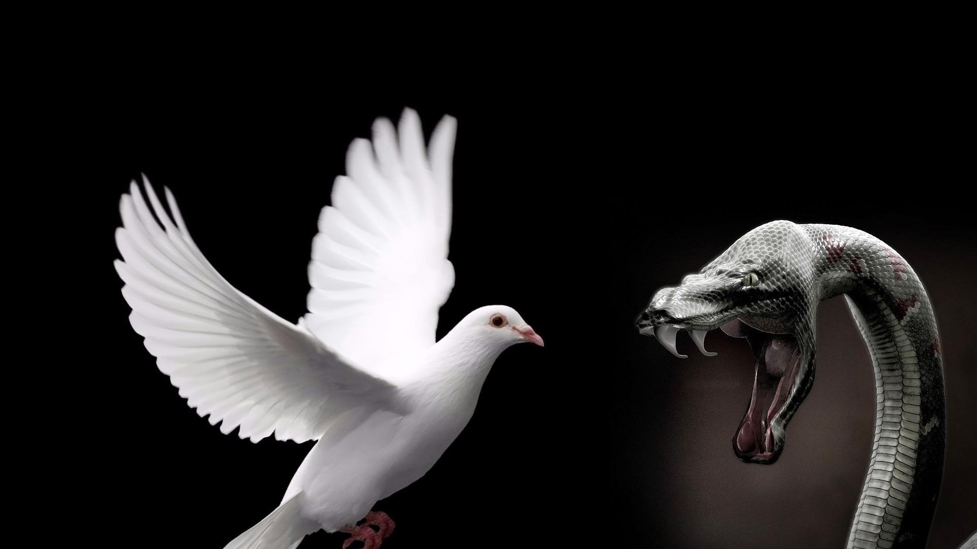 Змея и голубь