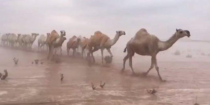 Потоп в Саудовской Аравии