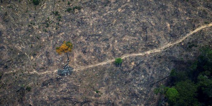 Заброшенные поля зарастают лесом намного быстрее, чем считалось