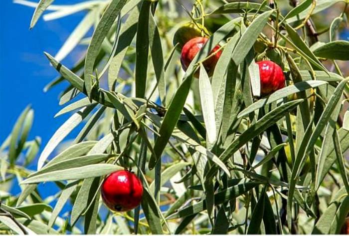 Оказывается, у персиков много общего с...вишнями. /Фото: cod15.ru